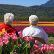 Stock Photo: Elderly ladies in tulips