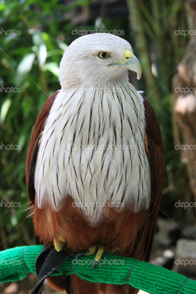 Beautiful Hawk on a perch. — Stock Photo #11340567