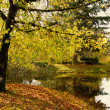 Autumn scene — Stock Photo #11458349