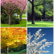 Four seasons - Foto Stock