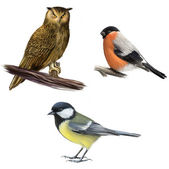 Owl, Tit and Bullfinch on a White Background — Stock Photo