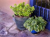 Garden ceramic flower pot with plants — Stock Photo