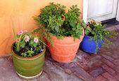 Garden сeramic flower pot with plants and flowers — Stock Photo