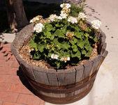 Bloomer in outdoor wooden flowerpot — Stock Photo