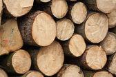 Fire wood — Stock Photo