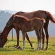 Foal and mare - Stock Photo