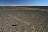 Stone desert - hamada — Stock Photo
