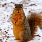 Squirrel — Stock Photo #11391774
