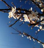 Spring associated — Stock Photo