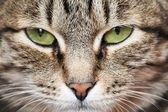 Green cat's eyes — Stock Photo
