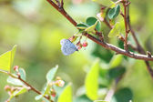 Small butterfly on a green tree — Stock Photo