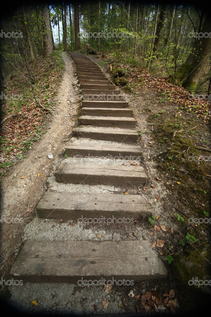 Steps lead upwards through a forest — Stock Photo #11055861