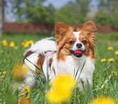 The dog on the grass — Stock Photo