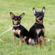 Two dogs sitting on the grass - Stock Photo