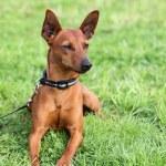Cute dog sitting on grass — Stock Photo #11051874
