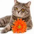 Cat with flower on white background — Stockfoto