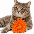 Cat with flower on white background — Stok fotoğraf
