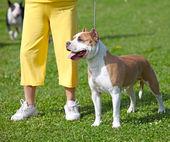 試験を待っているホステスと犬 — ストック写真