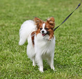 Dog standing on the grass — Stock Photo