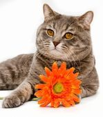 Cat with flower on white background — Stock Photo