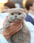 Kitten in the arms — Stock Photo