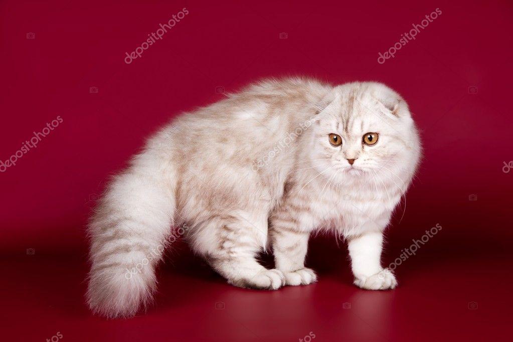 折猫的步骤图片