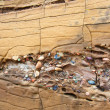 Stock Photo: Interlayer sandy stone