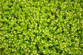 Textura de bush — Foto Stock