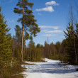 The end of winter in the taiga. Landscape — Stock Photo