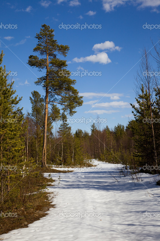 The end of winter in the taiga. Landscape against the blue sky — Stock Photo #11150052