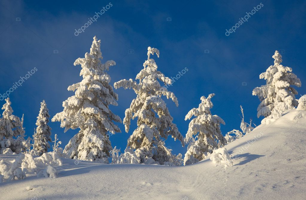 Winter landscape in the woods on a snowy hill — Stok fotoğraf #11150481