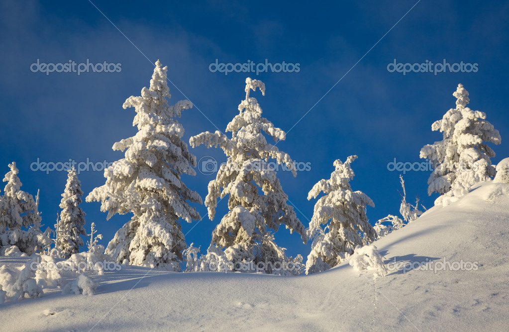 Winter landscape in the woods on a snowy hill — Foto Stock #11150481