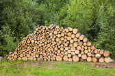 Holz zum trocknen in die woodpile gestapelt — Stockfoto