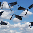Stock Photo: Airborne Graduation Hats