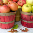Stock Photo: Autumn Apples with leaves