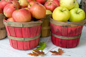 Autumn Apples with leaves — Stock Photo