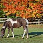 Horse grazing — Stock Photo #11050965