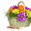 Colorful Daisy Basket — Stockfoto