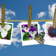 Flower snapshots on clothesline — Stockfoto