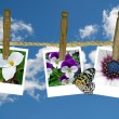Stock Photo: Flower snapshots on clothesline