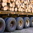Load of logs — Stock Photo