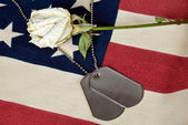 Military dog tag with rose — Stock Photo