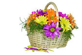 Colorful Daisy Basket — Foto de Stock