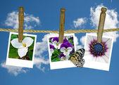 Květina snímky na prádelní šňůru — Stock fotografie