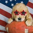 Golden retriever with sunglasses — Stock Photo