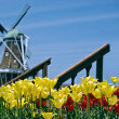 Dutch windmill with tulips — Stock Photo
