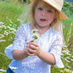 Bouquet of wild daisies — Stock Photo