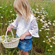 Girl picking wild daisies — Stock Photo