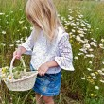 Girl picking wild daisies — Stock Photo