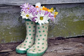 Daisy bouquet in boots — Stock Photo